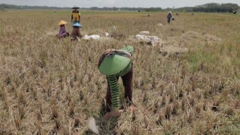 Indonesia's Electricity Project Faces Farmer Contentions