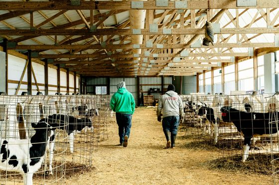 The Dairy Farm of Your Imagination Is Disappearing