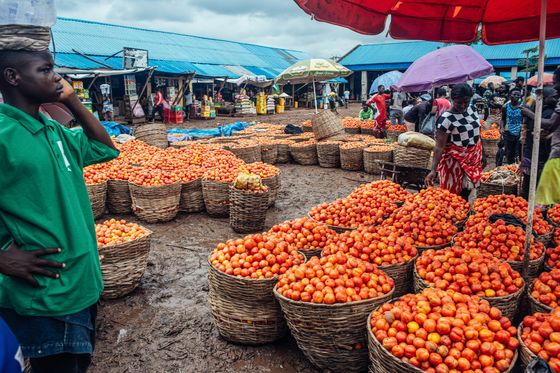 Billionaire Dangote Can't Get Enough Tomatoes to Run Plant Profitably
