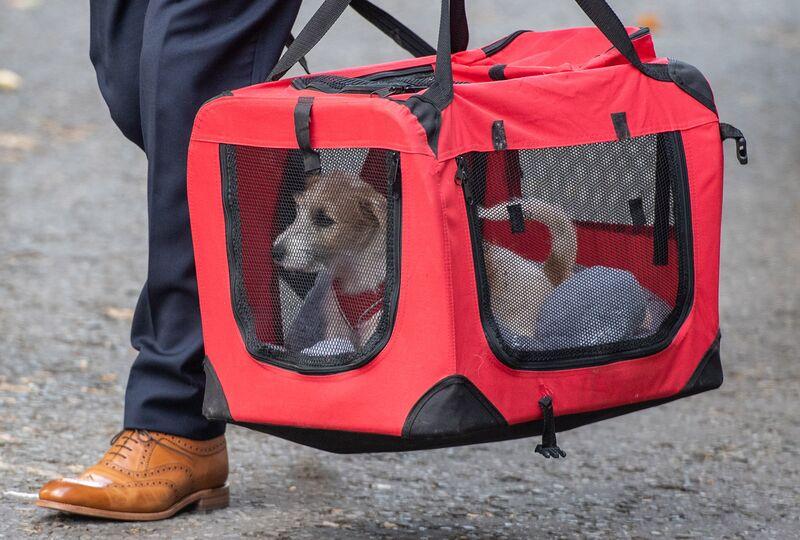 Boris Johnson Adopts Cute PuppyDog in Crucial Brexit Week