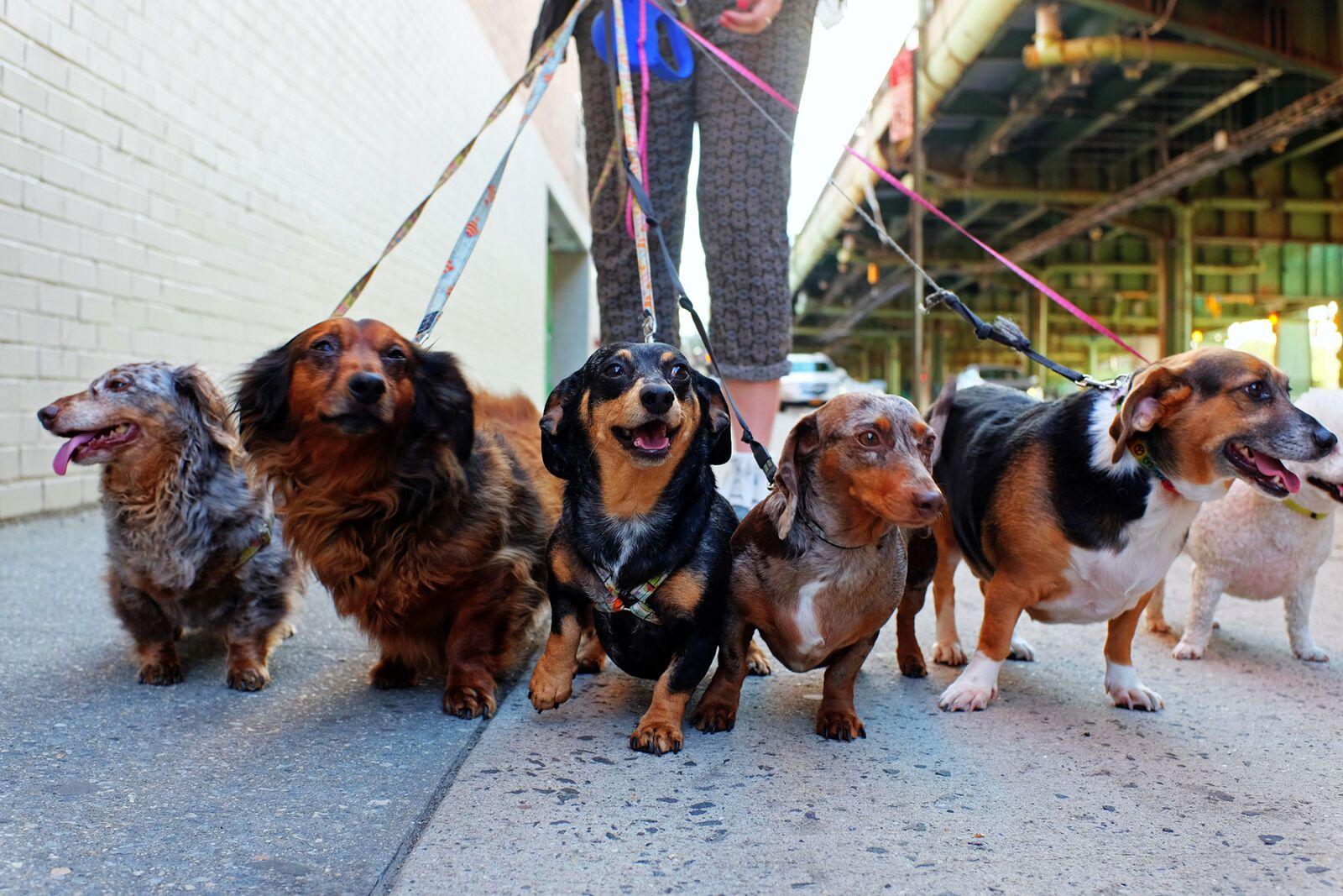 Tener un perro reduce el riesgo de morir, revela estudio