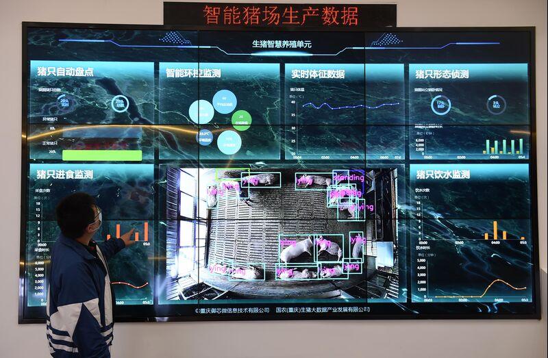 Nationa Hog Big Data Center In Chongqing