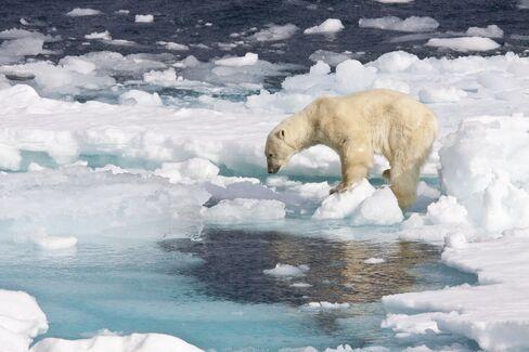 Arctic Sea Meltdown