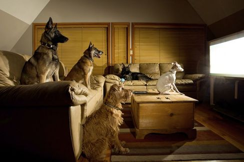 Discovery Wants Your Dog to Watch More TV