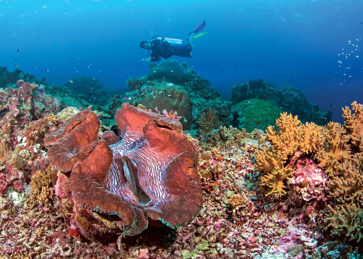 coral reef research papers