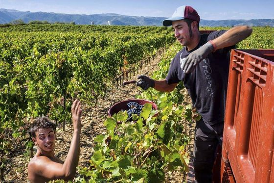 After Disastrous 2017, French Winemakers Cheer 'Incredible' 2018 Vintage
