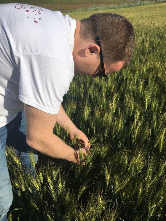 Crop Tours Provide More Evidence of Spring-Wheat Pressure