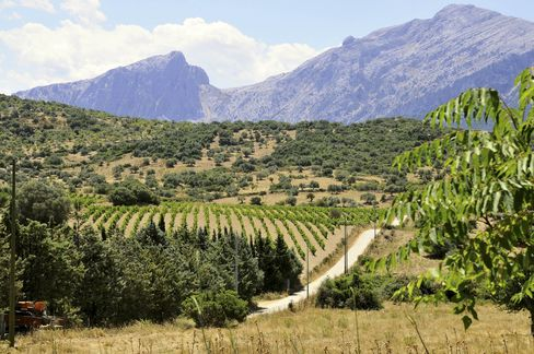 A vineyard in the rolling hills of Sardinia