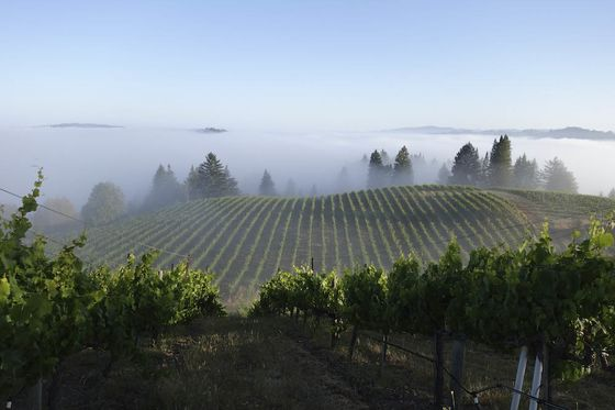 California's Edgiest, Riskiest Wine Region Is About to Get a New Name