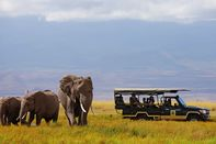 relates to The Wrong Way to Go On Safari, According to a Wildlife Photographer