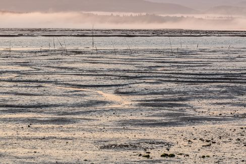 The tide flats of Willapa Bay
