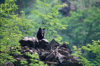 relates to Japan Faces Worst Wild Bear Attacks in Five Years During Virus