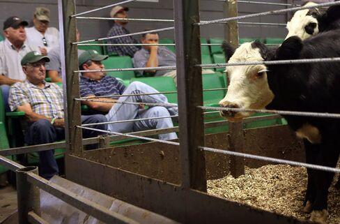 Drought Forces Cattle Sales