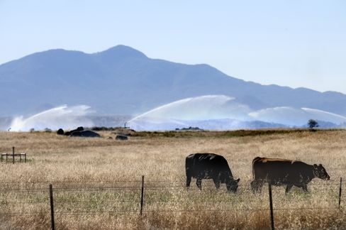 Cattle Disappearing Amid Drought Signals Beef Rally