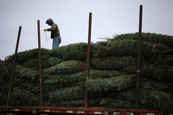 Christmas Tree Prices Jump as Homebound Americans Embrace Decor