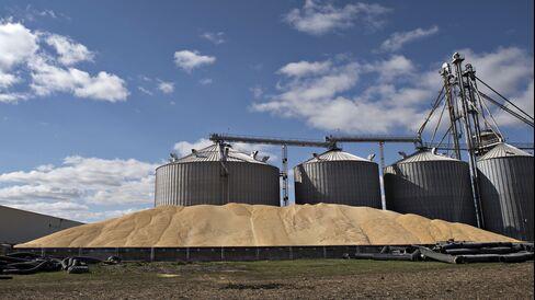 Record Corn Harvests