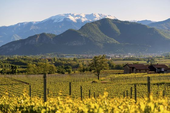 Beyond Prosecco: TheseItalian Sparkling Wines Are for More ThanMimosas