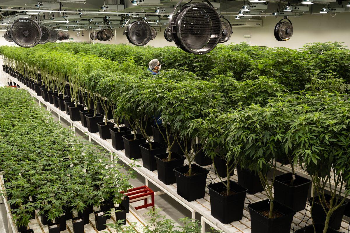 Marijuana Legalization Bill Passes House