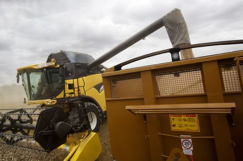 U.K. Wheat Harvest Using New Holland Agriculture Farming Machinery