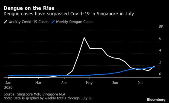 Singapore Grapples With Deadly Dengue as Fever Rages Alongside Covid-19