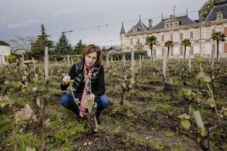 Maurice de Coninck checks a vine in the vineyard at ChâteauMarquis d'Alesme, which is being converted to organic farming.