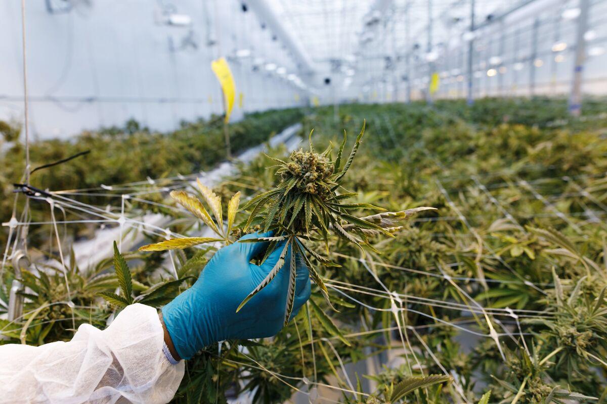 Pot Shorts Cash In On Hazy Profitability Path: Cannabis Weekly