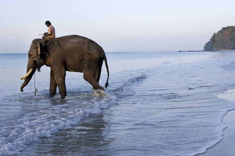 Havelock Island, Andaman & Nicobar Islands, Inde, sous-continent indien, Asie