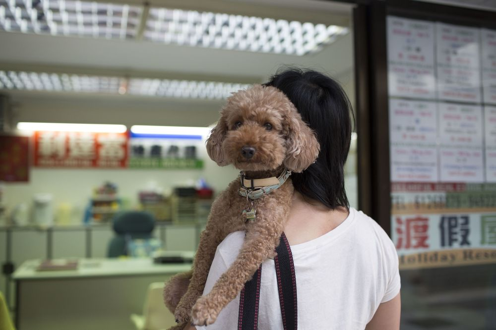 cfea2feac7e Boqii is tapping into rising affluence as more households adopt pets in a  Chinese market that