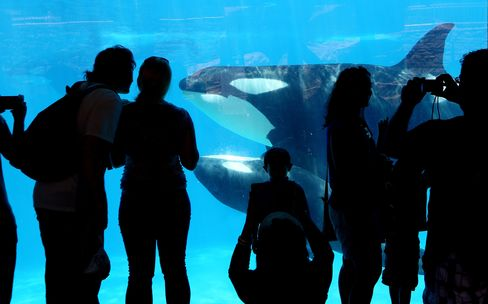 Visitors look at orca whales at SeaWorld in San Diego, July 17, 2013.