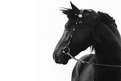 What's So Bad About Horse Meat, Anyway?