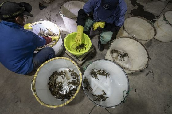 $400 Hairy Crabs Selling Out in China as Consumers Splurge