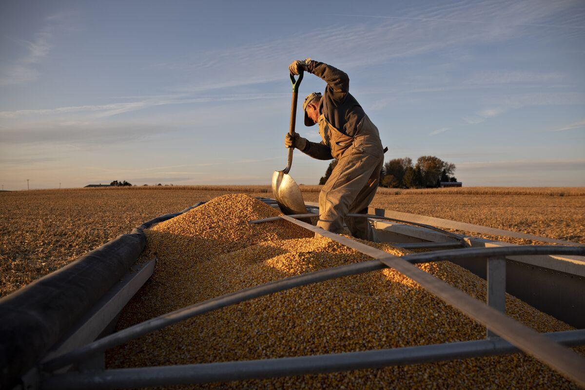 U.S. Corn Stocks Dwindle in Latest Jolt to Inflation Fears