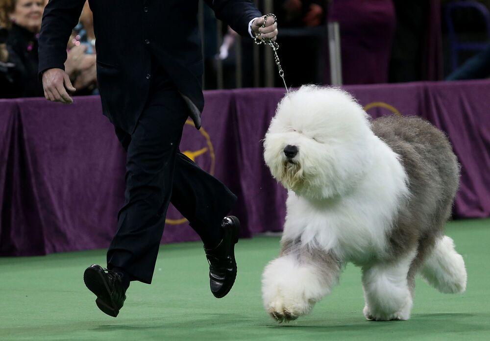 Show-Winning Dog Semen Is a Bargain at $2,000 - Bloomberg