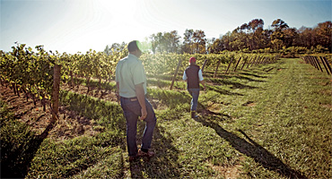 States Pour Government Money into Wine