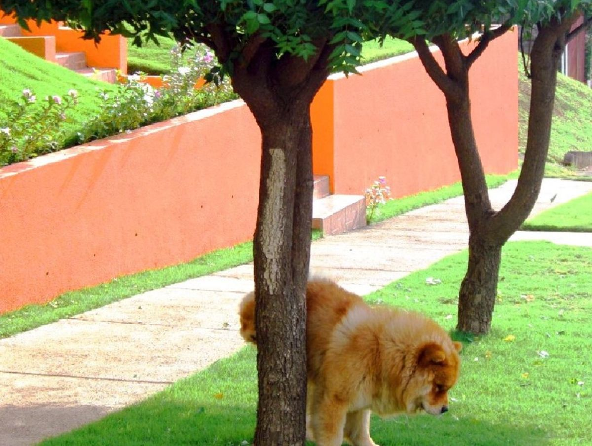 Why You Shouldn T Let Your Dog Pee On Trees Bloomberg