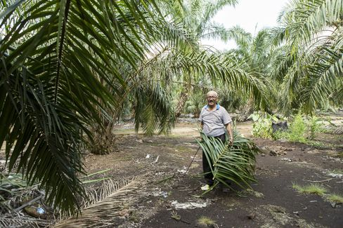 Isman Abdul Karim at the oil palm plantation.