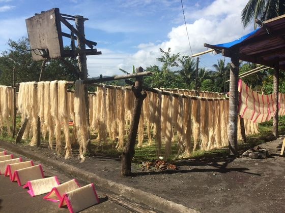 Masks Made From Banana-Tree Species Cut Covid's Plastic Waste