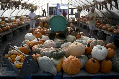 Varietal pumpkins on display