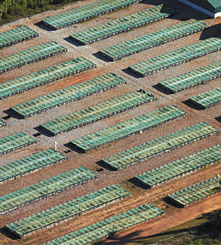 An Australian crocodile farm, from the air