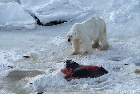 Svalbard in the Norwegian Arctic