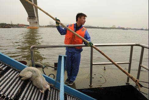 Shanghai Races to Clean River Where 2,800 Dead Pigs Were Found