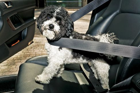Next in New Jersey: Pets Buckle Up?