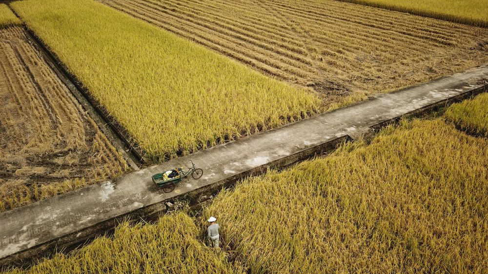 WTO to Issue Ruling in U.S. Dispute Over Chinese Farm Quotas