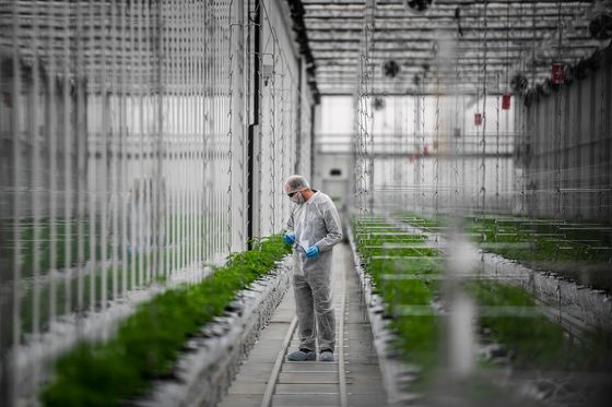 Pot Firm Tilray Speeds Expansion in Europe