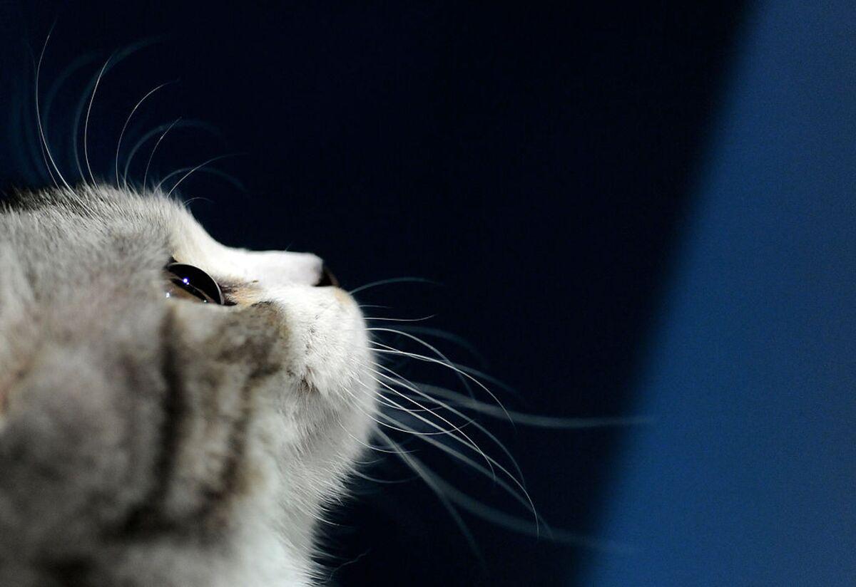 Saudi Arabia Just Lost a Kitten - Bloomberg Gadfly