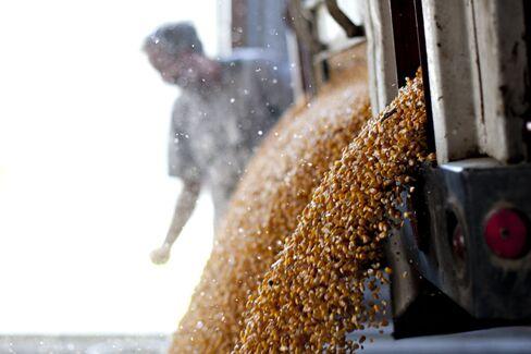 Corn Bulls Retreat as Near-Record Costs Curb Demand
