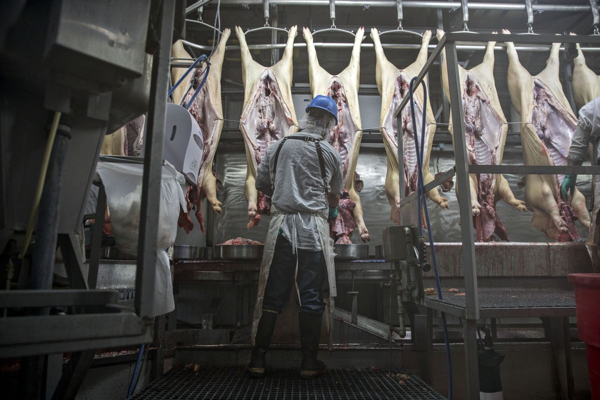 Union Sues to Block Trump Move to Speed Up Pig Slaughtering