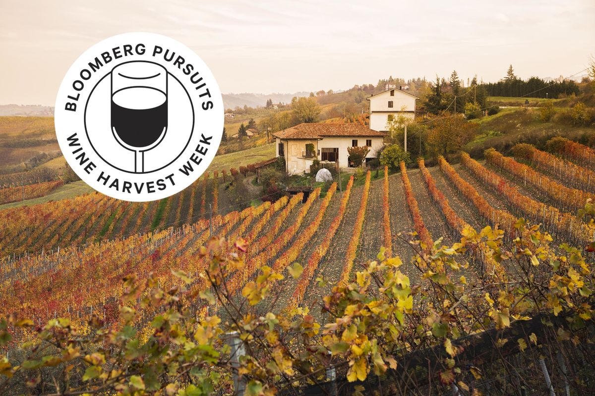 Why Piemonte, Tuscany's Lovely Stepsister, Is the Perfect Wine Trip Right Now