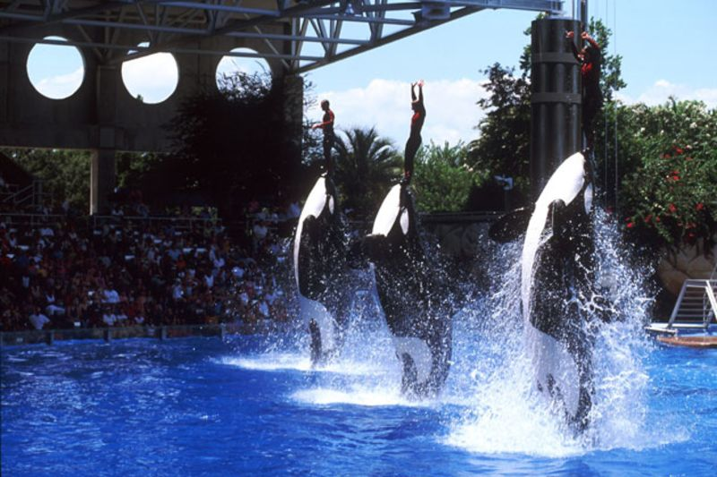 SeaWorld Fights Back at the Critical Documentary 'Blackfish ...