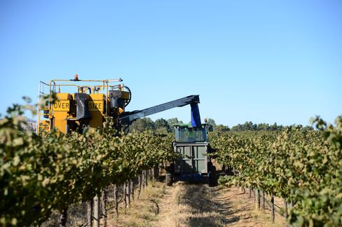 Treasury Wine Estates Ltd.'s Wolf Blass Vineyards